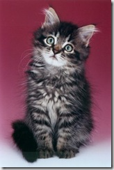 kitten-thumb.jpg
