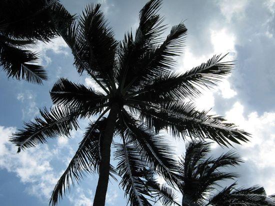 Bali_nusa_dua_beach_palm