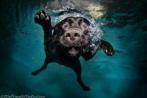 seth-casteel-underwater-dog-2