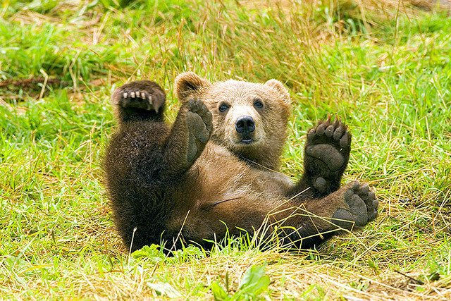 image brown bear cute