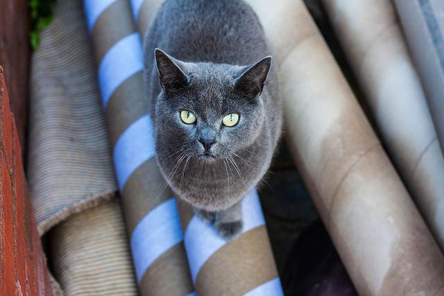 image gray cat